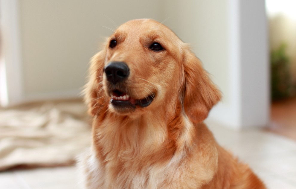 但苏格兰的动物主人却可在民居,医院以及特殊学校分享饲养宠物的乐趣.
