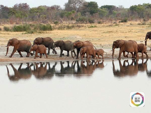 过去很长一段时间内,中国在非洲野生动物保护方面树立的正面形象并不突出,而外界对部分中国人热衷象牙制品以致为盗猎者提供市场也多有诟病。 最近几年,中国政府高层对非洲野生动物保护的高度重视正逐渐转化为实实在在的行动,赢得了国际好评。 2014年5月,中国国务院总理李克强访问肯尼亚期间与肯尼亚总统肯雅塔共同参观肯尼亚内罗毕国家公园焚烧象牙纪念地,表明两国在共同打击非法盗猎和走私象牙行为,以及加强野生动物保护合作的诚意。 2015年12月,中国国家主席习近平在对津巴布韦进行国事访问期间考察了一家野生动物救助基地