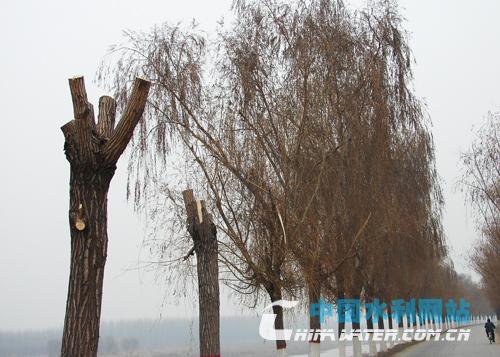 冬季是树木的休眠期,此时进行修剪不会影响树木的